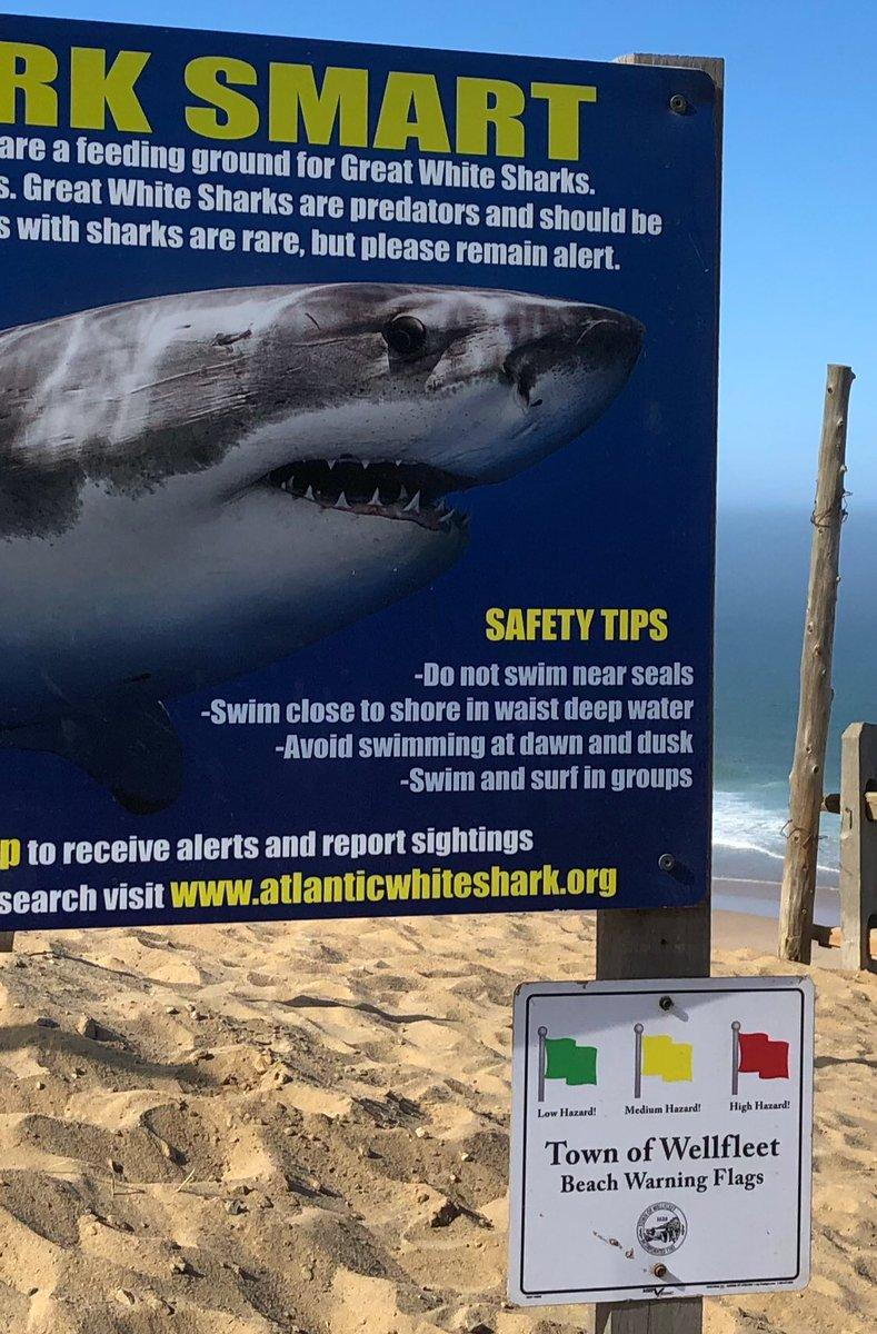 Shark Science on Twitter: