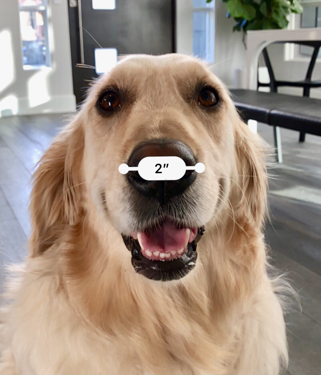 Chica has a 2-inch snoot