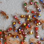 Image for the Tweet beginning: Les colonies de fourmis, ou