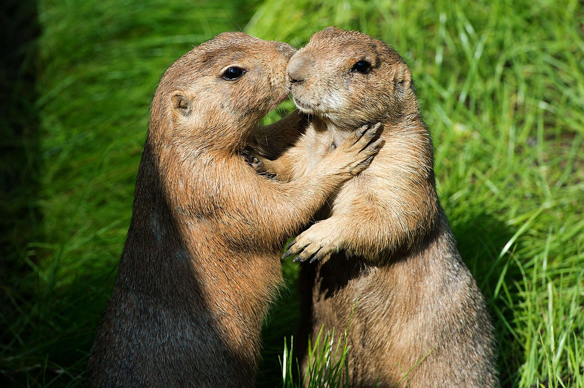 Фото где животные обнимаются