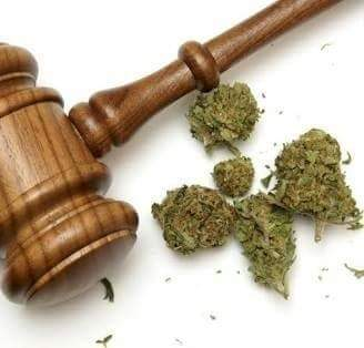 BREAKING NEWS: The use of dagga is now legal in South Africa. The Constitutional Court just ruled that it is a human right.