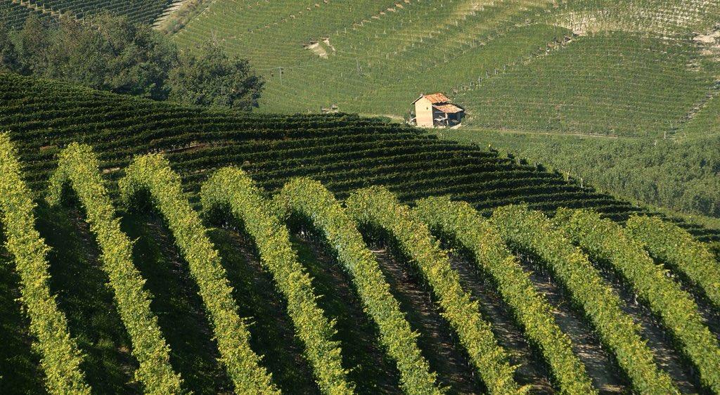 Storicamente luogo di riparo e sosta per chi doveva lavorare nelle #vigne e nei campi tutto il giorno,il #ciabòt veniva utilizzato anche per la primissima lavorazione dell' #uva.  - Ukustom