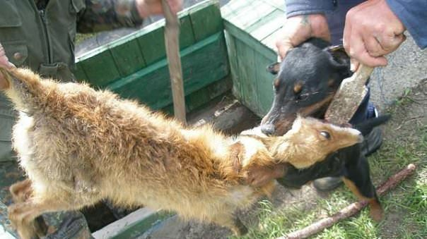 Total ban for hounding stations in Russia! Plz sign: Photo