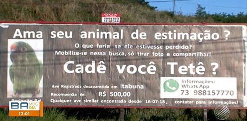 Periquita de estimação some e baiano mobiliza cidade com outdoor para encontrar animal https://t.co/mw4ykN6Hli #G1