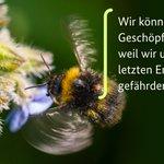 Insekten Twitter Photo