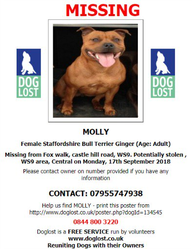#LOST #DOG MOLLY Female Adult Ginger #StaffordshireBullTerrier * Small White Patch on Chest #Missing from Fox walk, Castle Hill Road, #Walsall #WS9  Monday 17th September 2018 @SAMPAuk_  #ScanMe @VetsGetScanning #DogLostUK   http://www. doglost.co.uk/pet/134545  &nbsp;  <br>http://pic.twitter.com/iWsK9bZAP1