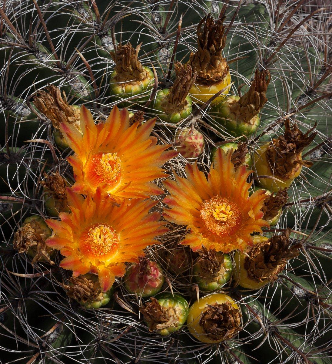 Desert Botanical Garden - @dbgphx Twitter Profile   Twipu