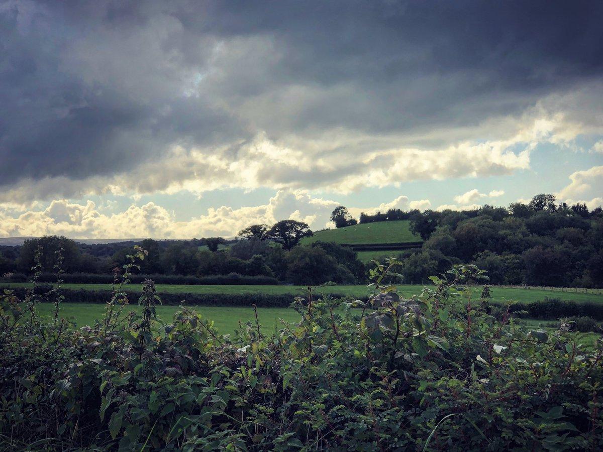 hedgehogpoetry photo