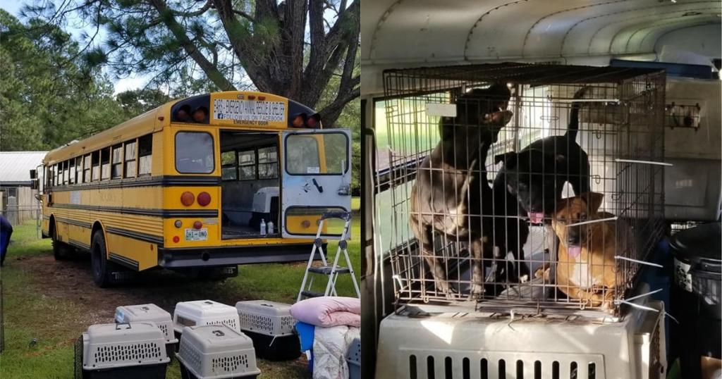 Pet lover helps dozens of cats and dogs escape Hurricane Florence on a school bus https://t.co/xjxMraokrt