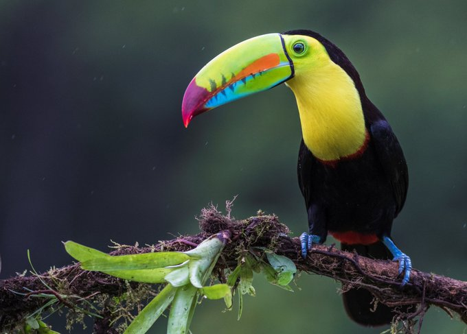 Book your flight from IAD-SJO with @FlyVolaris and make #ToucanTuesday a thing! #TravelTuesday Photo