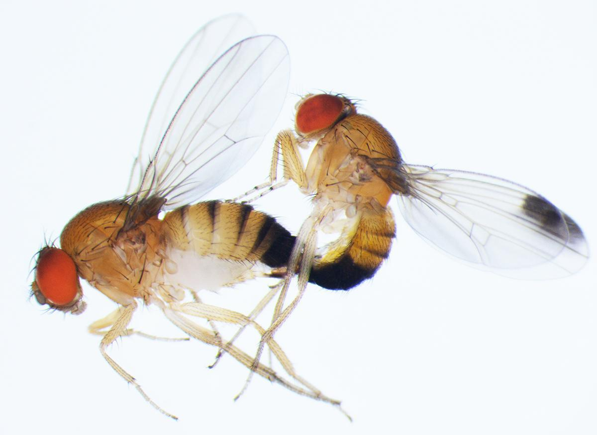 Looks like a bug bite sexual