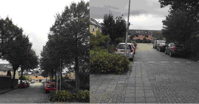 Rondvragen betreffende overlast bomen en parkeerproblemen Meibloem https://t.co/7iz3FpoEMv https://t.co/PGZGzHyIKU