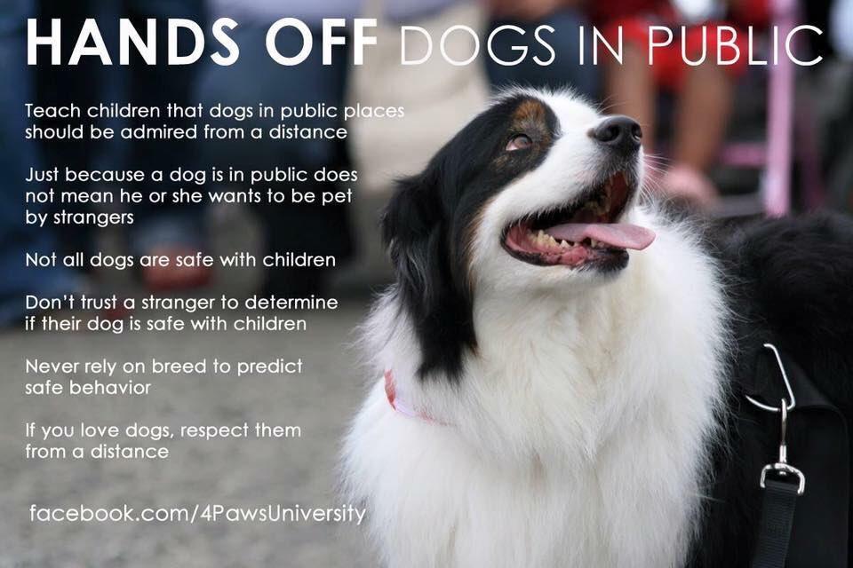 Always ask before you say hello #staysafestayback #staysafe #DogBehavior #adoptddontshop #dogsoftwitter #mansbestfriend #DogLover #DogTraining #ask #WednesdayWisdom<br>http://pic.twitter.com/ZLZJikpWRi