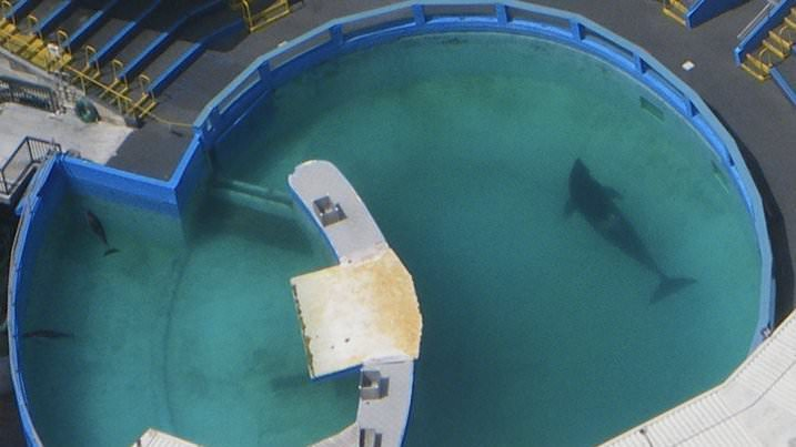 Help to retire Lolita the orca! Plz sign: https://t.co/RomSSXwHiK https://t.co/cajZI5cRl4