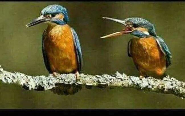 Don't know much about birds but easy to identify the husband in this picture