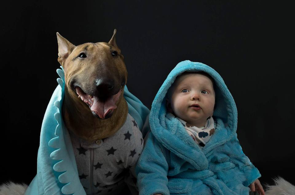 Sometimes I get asked is it tough being so handsome. The answer is YES, it's incredibly difficult at times! #bullterrier #minibull #MEBT #dogsoftwitter<br>http://pic.twitter.com/0lGgyTiW1u