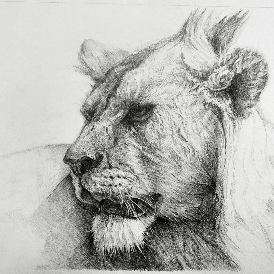 Beautiful graphite drawing by #Artist, John Kennedy.   Fine #Art tips and how to draw and sketch with John Kennedy on Colour In Your Life!   https://www. youtube.com/watch?v=IgGKUw cqaQ8 &nbsp; …   #artoftheday #artisttowatch #artwork<br>http://pic.twitter.com/Wqfx84hHbR