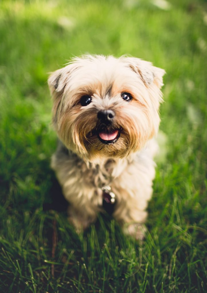 ( Are You Raising A &quot;Good Boi&quot; Doggie? )  https://www. dogmessenger.com/raising-a-good -boi-doggie/ &nbsp; …  #dogbehavior #dogmessenger #goodboy<br>http://pic.twitter.com/aa8rsGcgLN