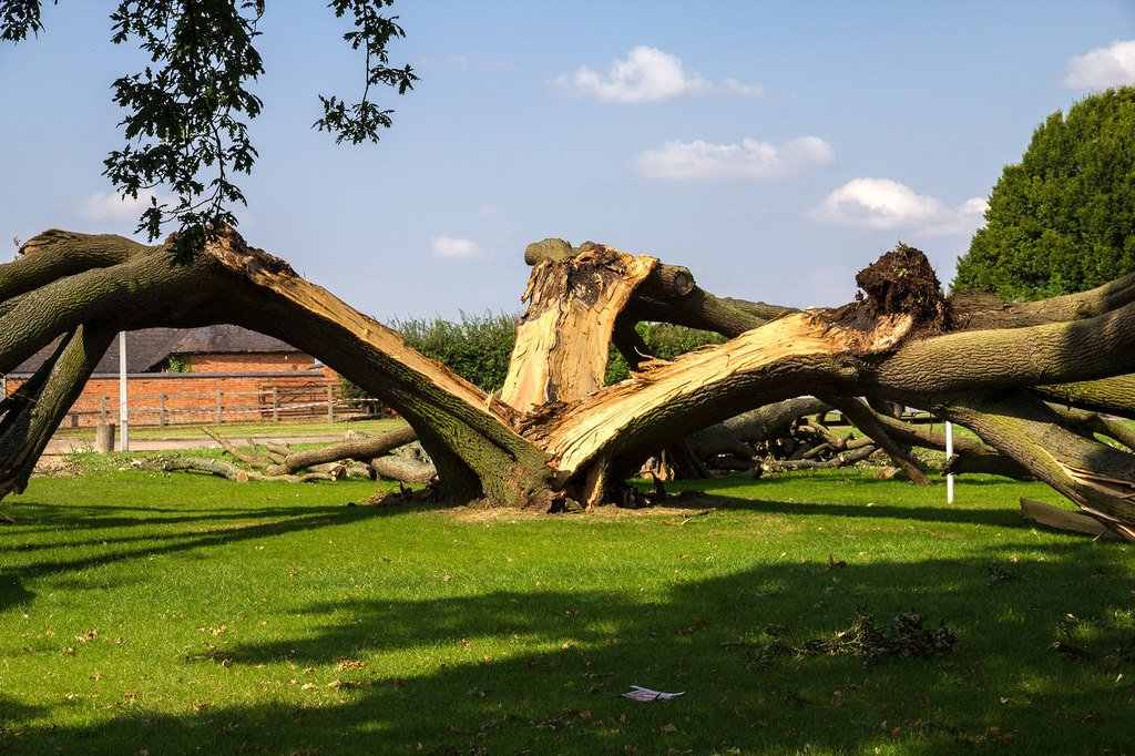 An oak tree that was struck by lightning and split into three. (Image: David P Howard) https://t.co/ifTZxsGEKC