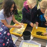 6A and 6C enjoying pond dipping at Wat Tyler... we have even caught a newt!