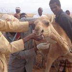 Faster disease data: Smartphone app in Kenya provides early detection of outbreaks in livestock and wildlife.   https://t.co/snbbRDq4C6  @CDCKenya