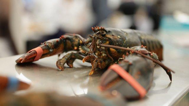 Maine restaurant to get lobsters high off marijuana smoke before killing them https://t.co/V0FdlPWx3h