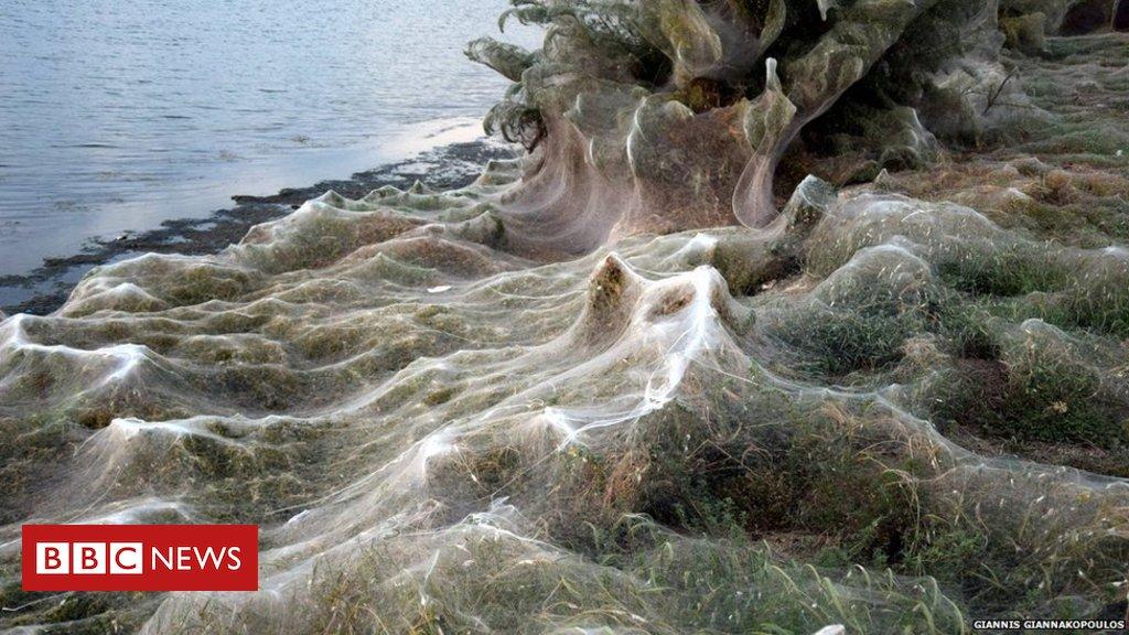 Teia de aranha gigantesca com mais de 300 metros cobre praia na Grécia https://t.co/KpnXwlJU2O