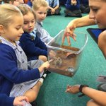 Getting up close and personal with Buttercup the rose tarantula and Charlie the corn snake. Thank you @ZooLabUK for visiting. #LongacreLife #EYFS #earlyyears