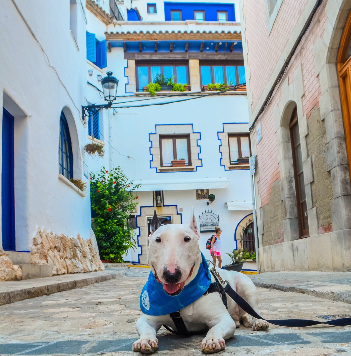 What has four paws, a blue bandana and the best smile in Spain? This guy! ... also thanks lady in the back for the photobomb  . . . #sitges #bullterrier #dog #doggo #dogsoftwitter #catalonia #puppers #bluedoors<br>http://pic.twitter.com/M9yThk8wMl