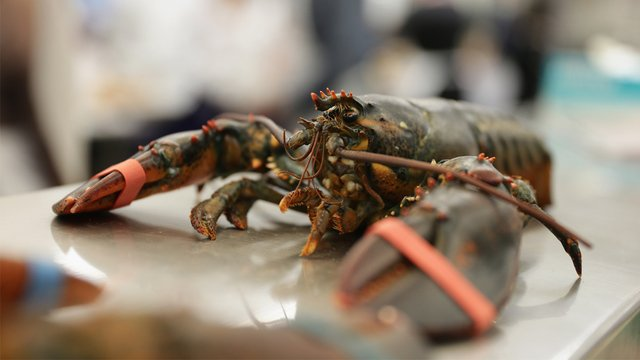 'BAKED' LOBSTER: A Maine restaurant is getting lobsters high on marijuana before cooking them because 'it is more humane.' https://t.co/LeFuHDHDQa