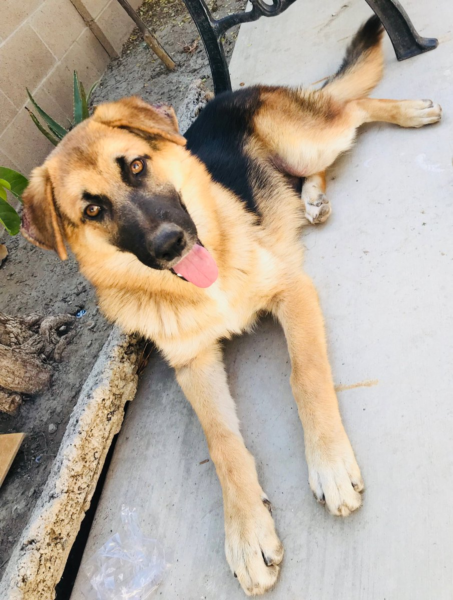 Troy's brother (Draxler!) is still looking for a home. If you're near OC and are legitimately interested in adopting him please reply & have open DMs so I can contact you!
