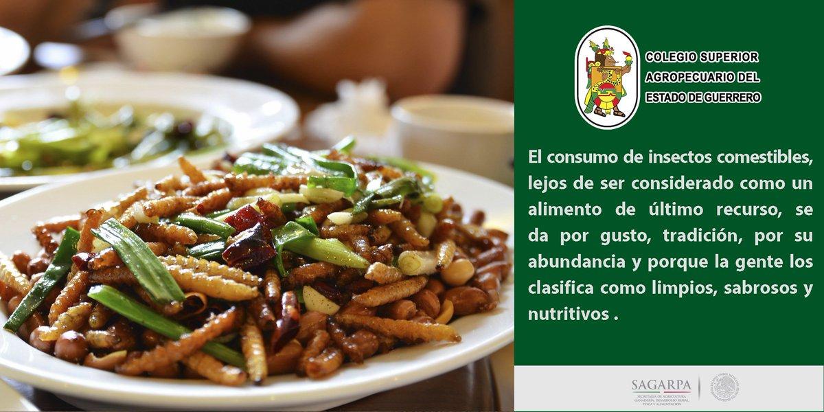 insectos comestibles Existen aproximadamente 1,681 especies de #insectos en todo el mundo que son aptos para la alimentación, esto significa que nuestro país cuenta con casi una tercera parte de ellos. http://ow.ly/Vu3R30jURt9