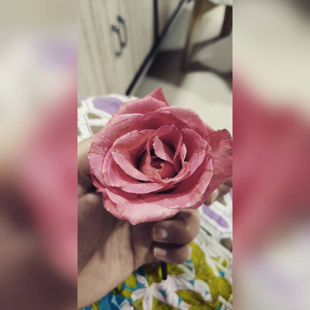 Ms L On Twitter A Roses Rarest Essence Lives In The Thorn