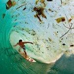 #plasticpollution Twitter Photo