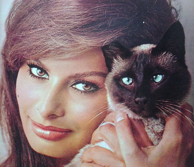 Sophia Loren S Birthday Celebration Happybday To