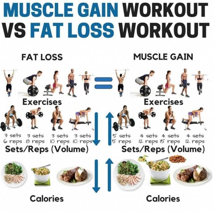 Fitness Hacks 24 7 On Twitter Muscle Gain Workout Vs Fat Loss