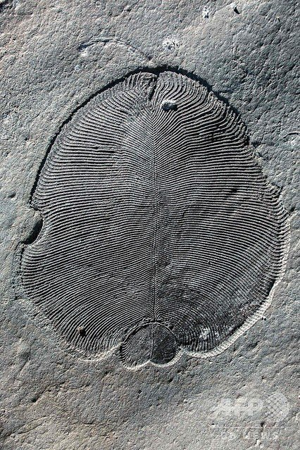 500RT:【研究】5億5800万年前の化石から脂質、「最古の動物」と判明 https://t.co/Ac8E25TAb0  今回の発見で「ディッキンソニア」という生き物が、5億5800万年前に豊富に存在していたことが判明したという。