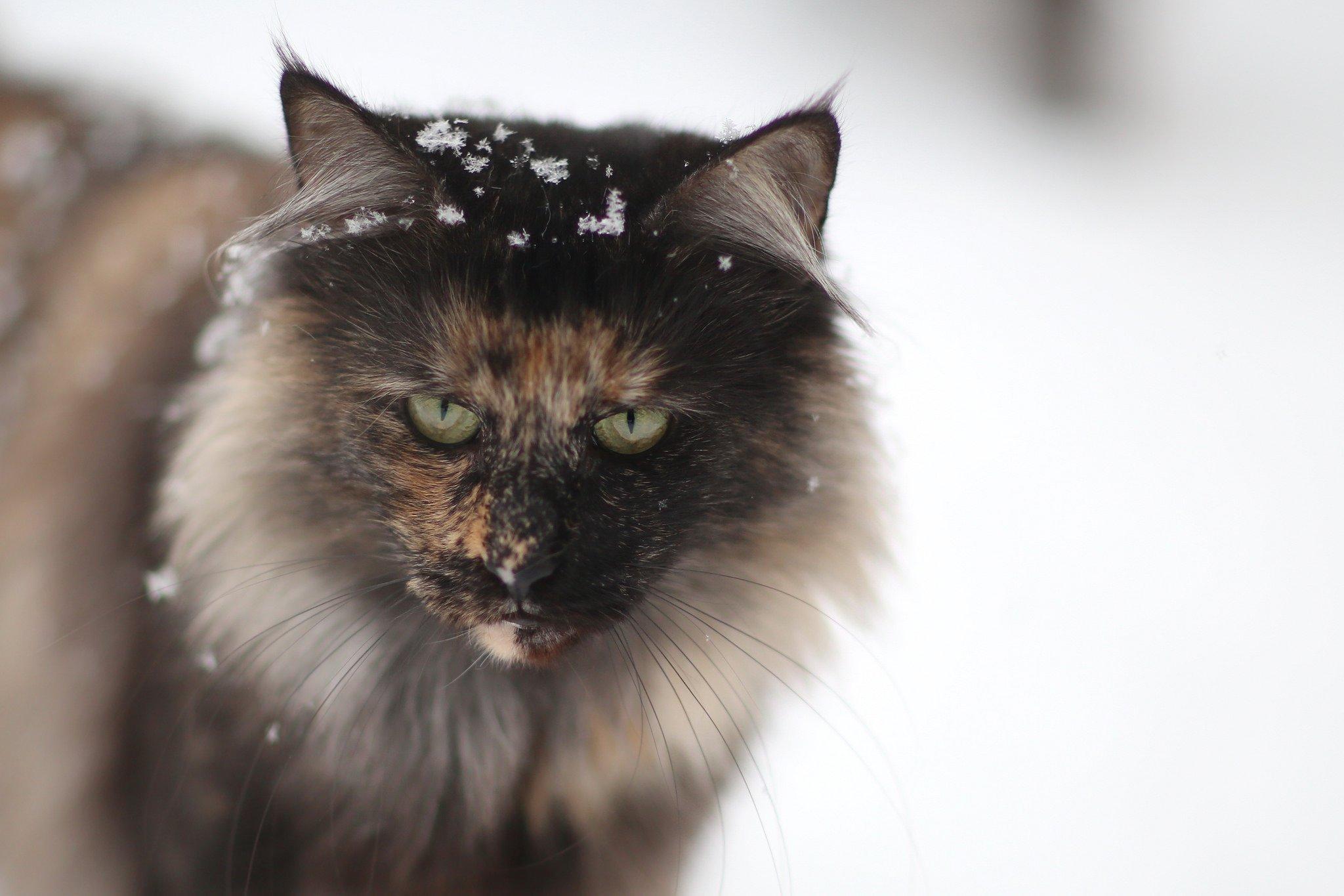 Black Metal Cats on Twitter: