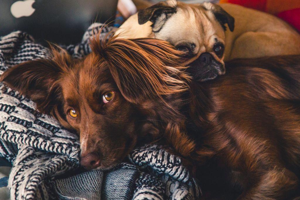 A chi vanno gli animali domestici in caso di #separazione o #divorzio? https://buff.ly/2D6VKvB#AFBlog#AFRisponde  - Ukustom