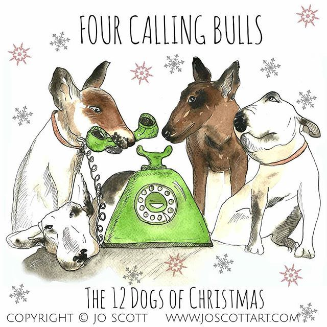 Four Calling Bulls, one of my favourites (if I had to pick just one!) #12dogsofchristmas #bullterrier #bullterriersofinstagram #dogchristmascard #joscottart<br>http://pic.twitter.com/lYMd7Xe60u