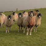 Image for the Tweet beginning: Turning the tups out? Remember