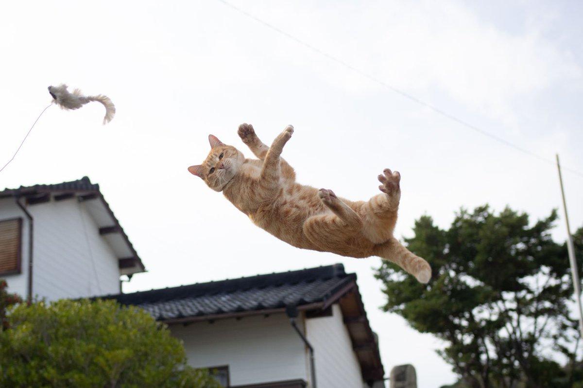 自信満々で飛びついてみたものの全然届かず「は?そんな高いの届くわけないでしょ」みたいな抗議の目で見てくるのはやめて頂きたい  まだ飛んでる途中でしょ