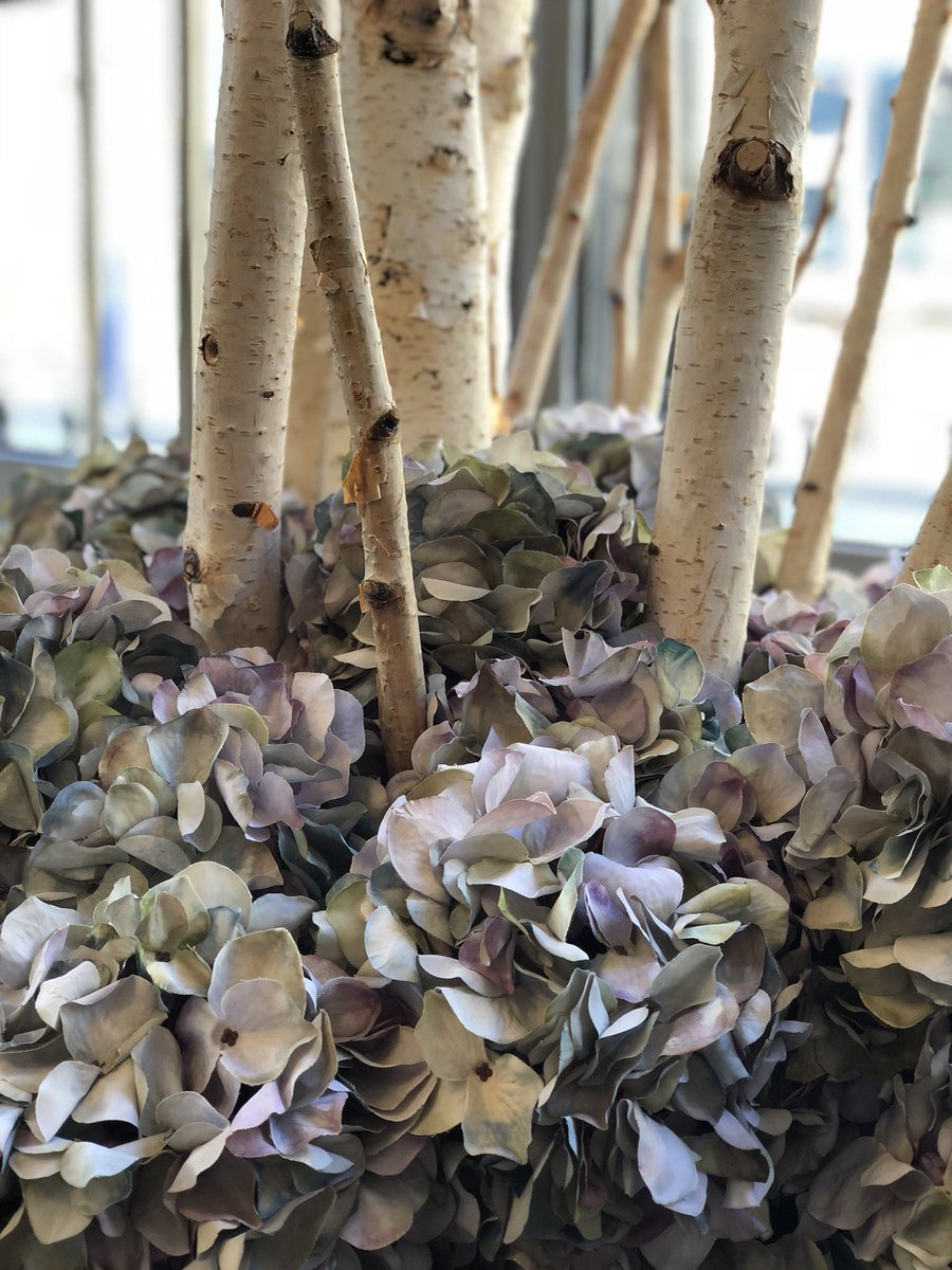 Our beautiful faded autumnal hydrangeas are back in stock.  #hattonandharding #hattonandhardinginteriors #hydrangeas #fauxhydrangeas #fauxflowers #foreverflowers #interiordesign #interiordecor #interior_design #interior_and_living #accessories #housebeautiful #inspiration<br>http://pic.twitter.com/eNkNK9J8Pq