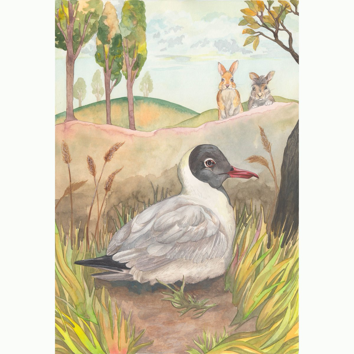 Well, I decided to add a bit more interest to this one. I think its an improvement. #birdart #blackheadedgull #illustrationart #watershipdown #kidlitart #childrensillustration #watercolorpainting #watercolorart<br>http://pic.twitter.com/Ut28PpvEhc