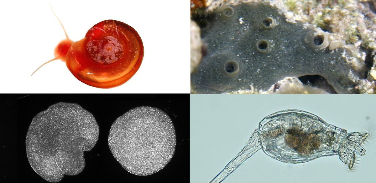 After something with less backbone? Check out the #GIGAcollection - a new @PLOS Collection of research into invertebrate genomics, curated by @gwoerhe for @GIGA_COS - read @gwoerhes PLOS #Biologue blog post: plos.io/2OIHkTs Collection: plos.io/GIGA