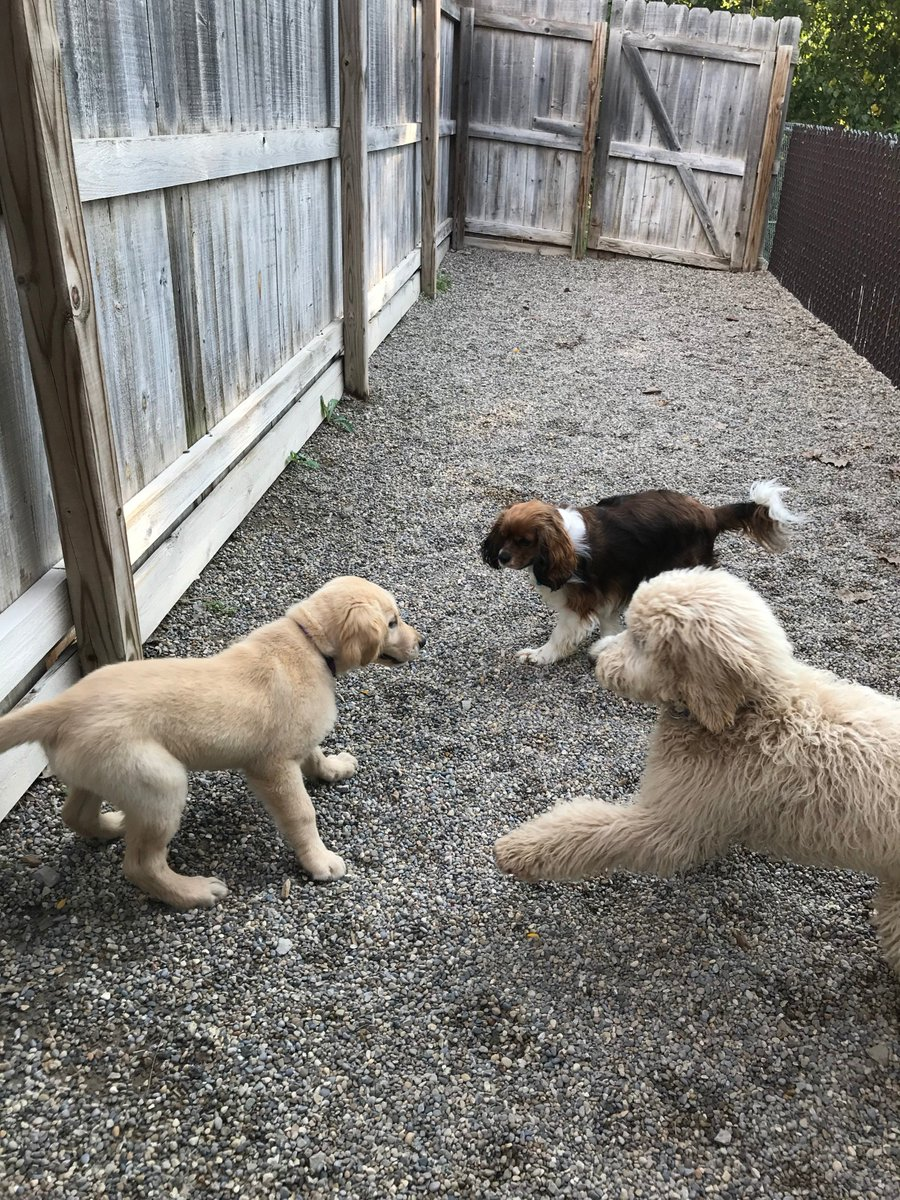 Wyatt and Cooper D. get ready to play with Gunner