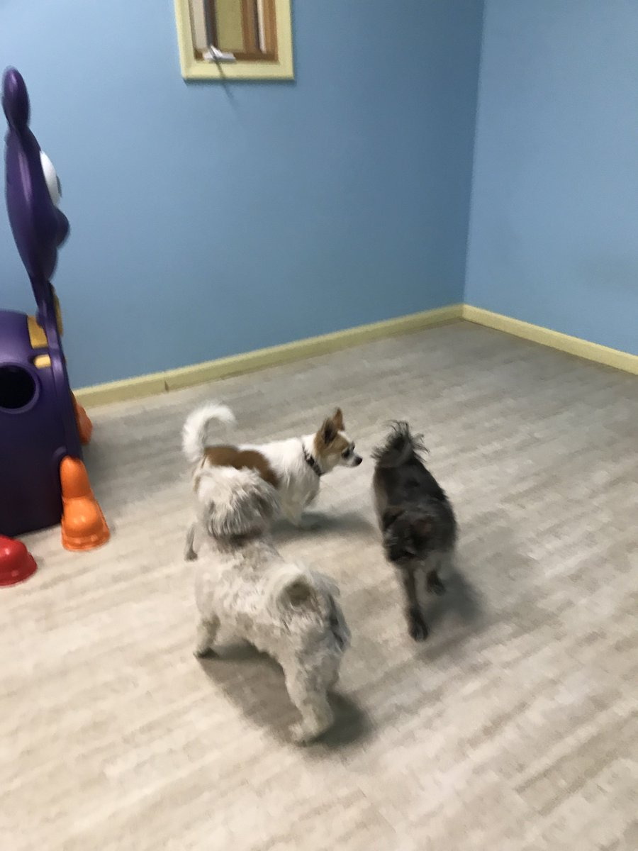 Lola, Ripper and Gilly play ring around the rosie