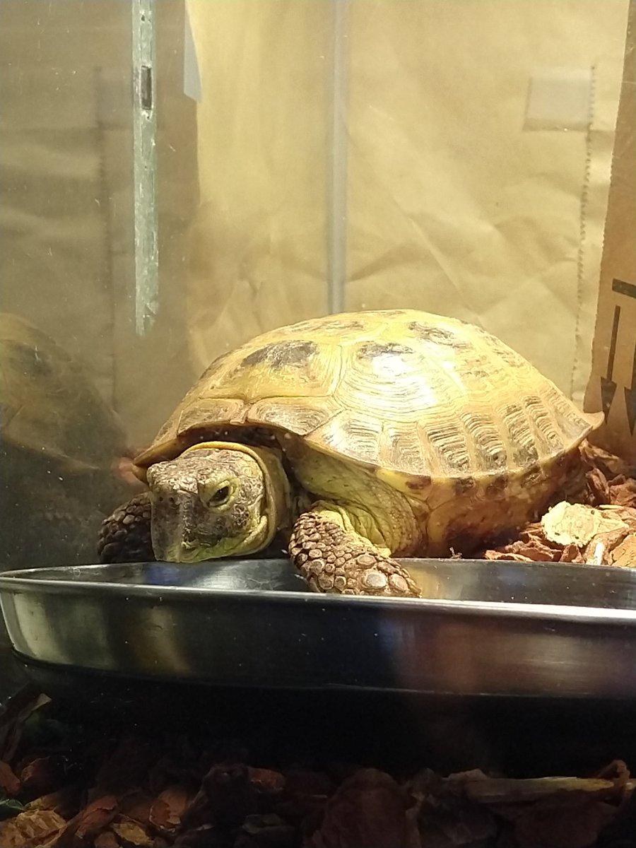 Titus the Tortoise (@TitusTortoise)   Twitter