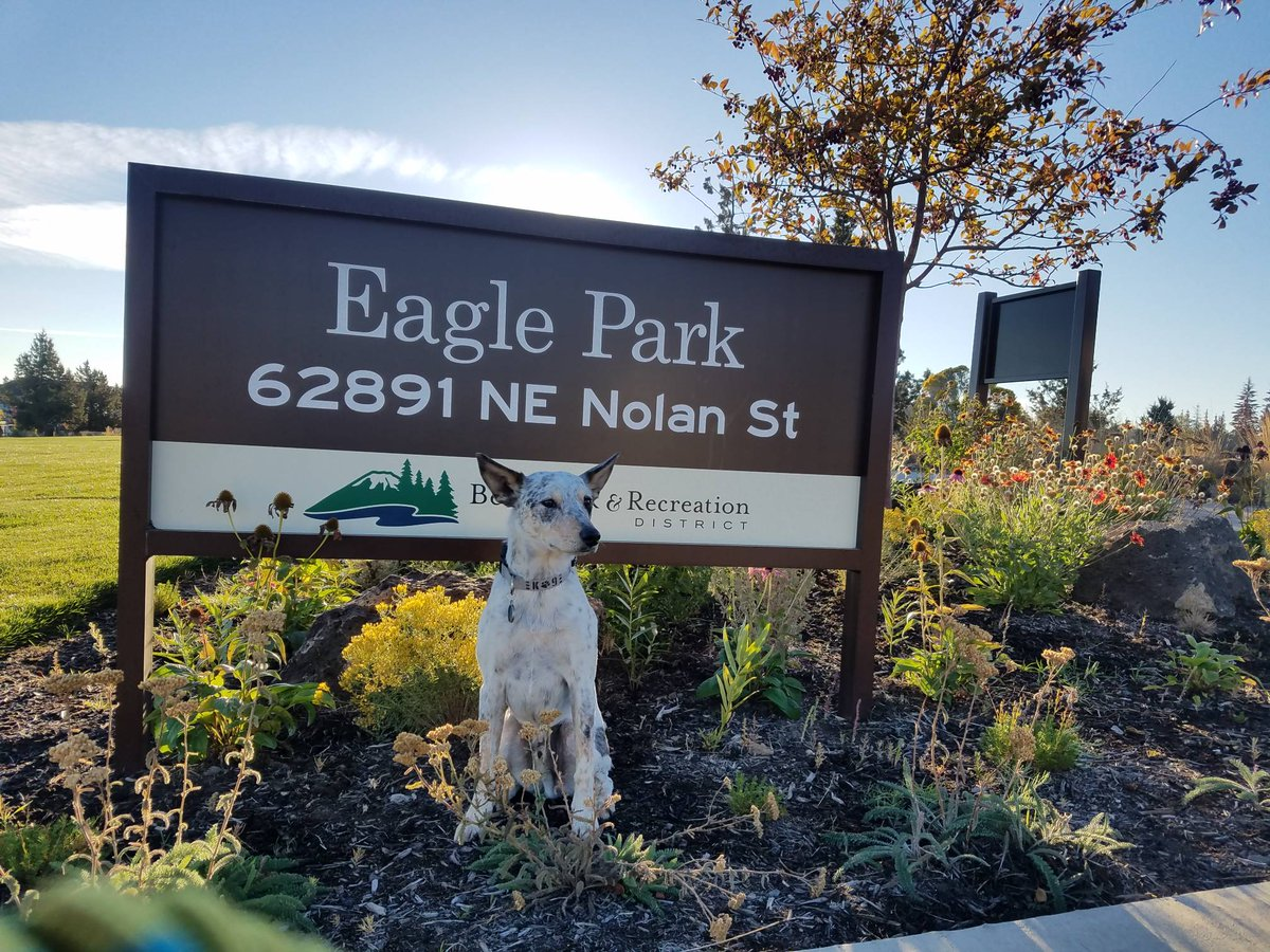 Jax enjoying another day in Real Estate. We caught him in the Eagle Point neighborhood right next to Eagle Park. #JaxRealEstateTrax #EaglePark #Bendoregon #GetOutside #TeamMascot #realestateprofessionals #TakeYourDogtoWorkDay