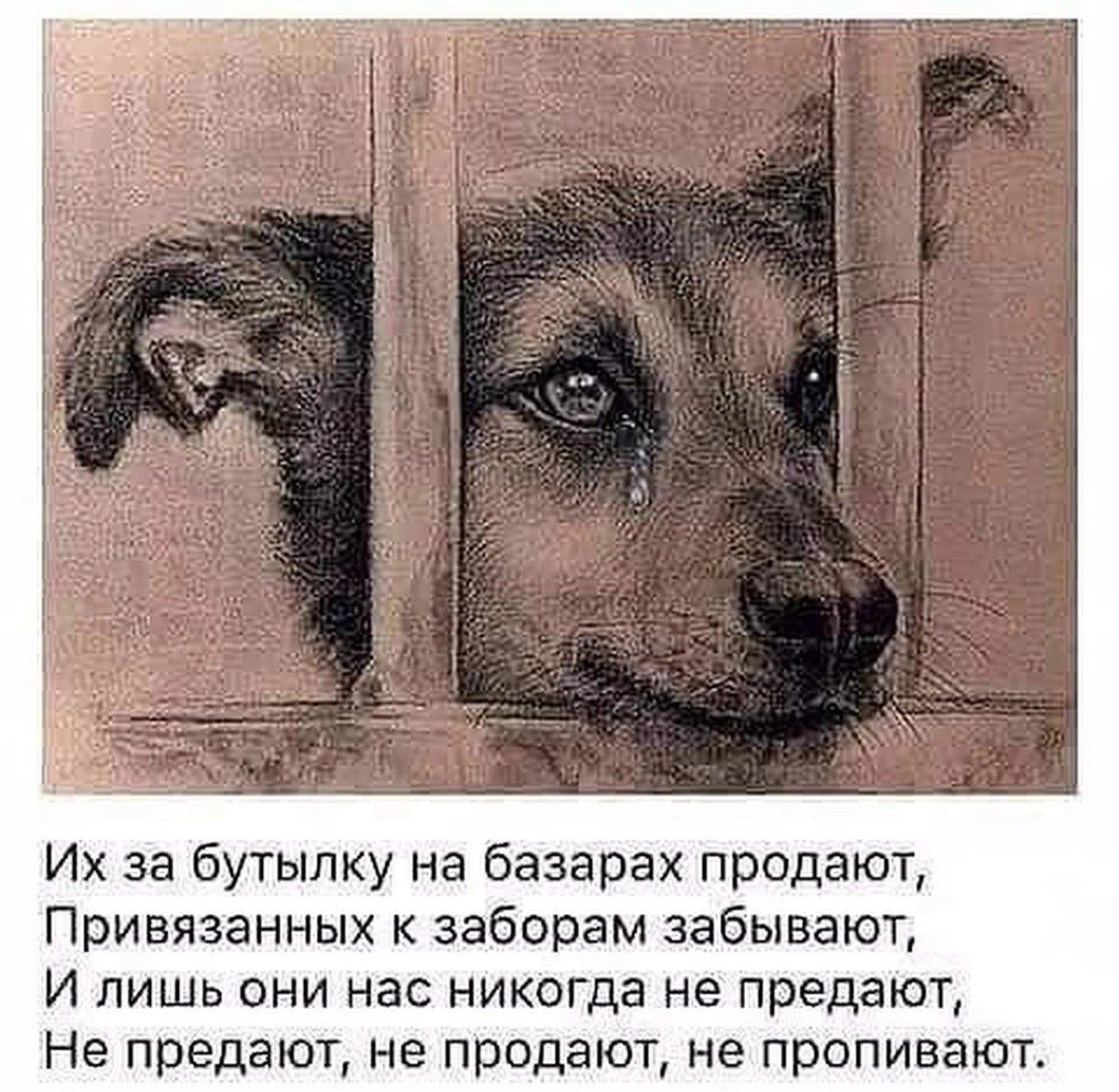 Картинки про животных с надписями грустные, поздравления